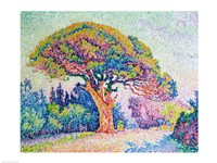 The Pine Tree at St. Tropez, 1909 Fine Art Print