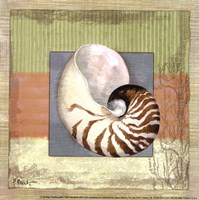 Montego Nautilus- petite Framed Print