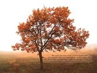 Silent Oak Fine Art Print