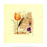 Flower Notes with Orange Tulip Fine Art Print