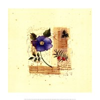 Flower Notes with Blue Poppy Fine Art Print