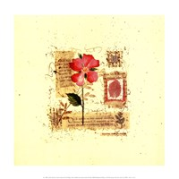 Flower Notes with Pink Poppy Fine Art Print