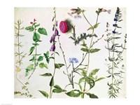 Eight Studies of Wild Flowers Fine Art Print
