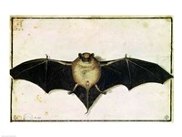 Bat, 1522 Framed Print