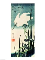 White Heron and Iris Fine Art Print