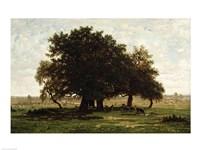 Holm Oaks, Apremont Fine Art Print