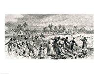 Labour in the Cotton Fields, Hoeing the Young Plants Fine Art Print