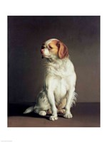 Portrait of a King Charles Spaniel Fine Art Print