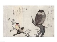 An Owl and two Eastern Bullfinches Fine Art Print