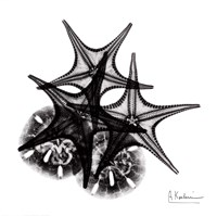 X-ray Starfish & Sand Dollar BW Framed Print
