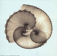 Circles of the Sea II Fine Art Print