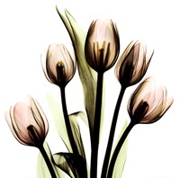 Crystal Flowers X-Ray, Tulip Bouquet Framed Print