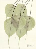 Cascading Bo Tree Fine Art Print