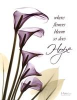 Blackberry Calla Lilies, Hope Framed Print