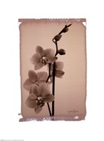Polaroid Orchid Fine Art Print