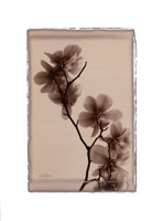 Polaroid Magnolia Fine Art Print