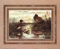 Anonymous - Ducks Fine Art Print