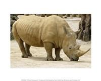 African Rhinoceros Fine Art Print