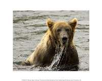 Brown Bear Fishing Fine Art Print
