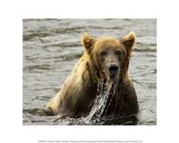Brown Bear Fishing Fine Art Print