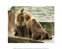 Grizzly Bear Cubs Fine Art Print