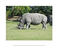 Rhino Grazing Fine Art Print