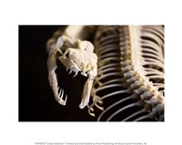 Snake Skeleton Fine Art Print