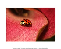 Ladybug On Leaves Fine Art Print