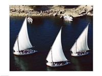 Sailboats in a river, Nile River, Aswan, Egypt Fine Art Print