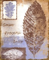 Leaf III Framed Print