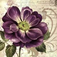 Study in Purple I Fine Art Print