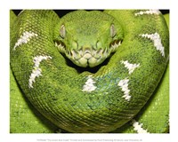 The Green Boa Snake Fine Art Print