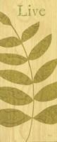 Nature Trio - Live Framed Print