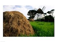 Traditional windmill in a field, Tacumshane Windmill, Ireland Fine Art Print