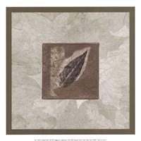 Elm Leaf Framed Print
