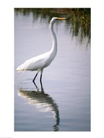 Egret In River Fine Art Print