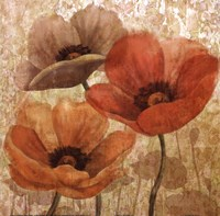Poppy Allure II Fine Art Print