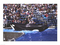 Killer Whale Sea World San Diego California USA Fine Art Print