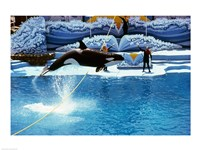 Shamu-Killer Whale Sea World San Diego California USA Framed Print
