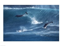Dolphins Catching A Wave Fine Art Print