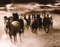 Running Horses Fine Art Print