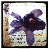 Blooming Purple II Framed Print