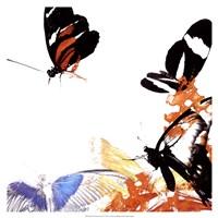 Butterfly Infloresence IV Framed Print