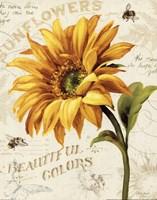 Under the Sun II Fine Art Print
