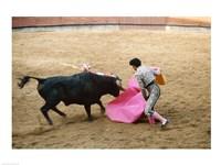 Matador fighting a bull, Plaza de Toros, Ronda, Spain Fine Art Print