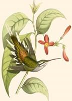 Delicate Hummingbird Fine Art Print