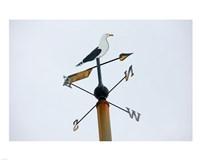 Seagull Weathervane Fine Art Print
