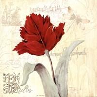 Tulip Gem II Fine Art Print
