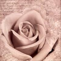 Vintage Rose II Framed Print