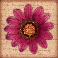 Purple Gazania Framed Print